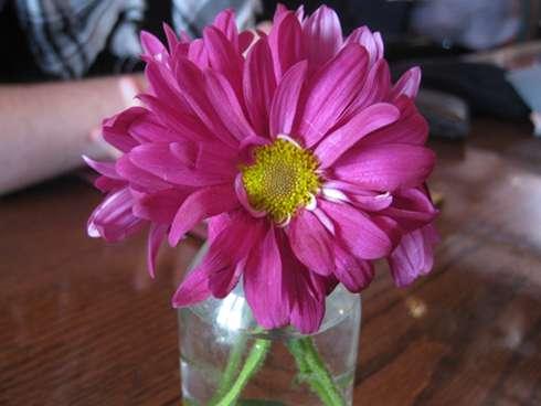 cardinal tea room flower